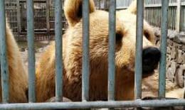 Օրենքով կարգավորվելու և խստացվելու է վերահսկողությունը վայրի կենդանիների անազատ և կիսաազատ պայմաններում պահման նկատմամբ